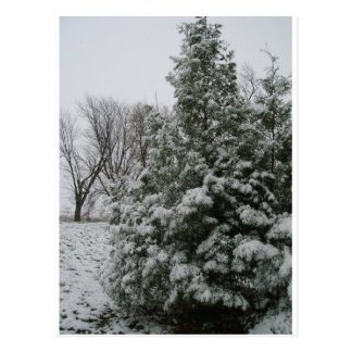 Winter Wonderland Pine Tree with Snow Fall Postcard