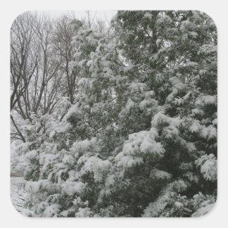 Winter Wonderland Pine Tree with Snow Fall Square Sticker