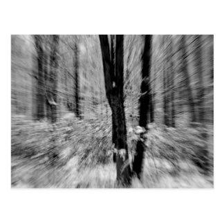 Winter Woods Blur Postcard
