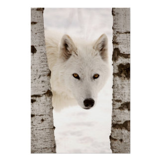 Winter's Wolf Poster