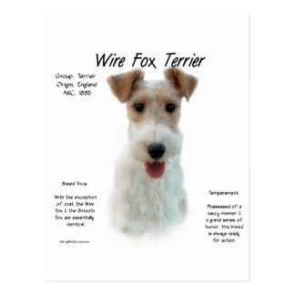 Wire Fox Terrier History Design Postcard