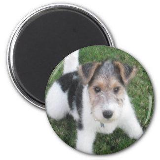 Wire Fox Terrier Puppy Magnet