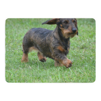 Wire Haired Dachshund 5x7 Paper Invitation Card