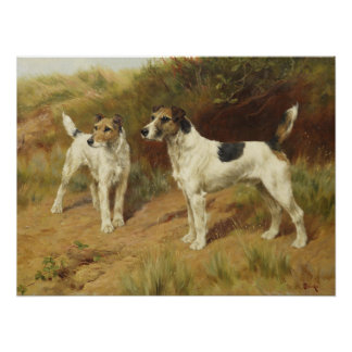Wire Haired Terriers by Thomas Blinks Poster