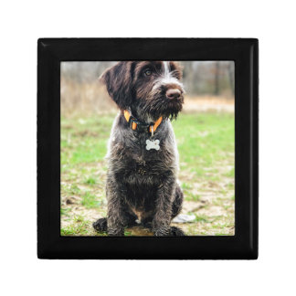 Wirehaired pointing Griffon puppy Gift Box