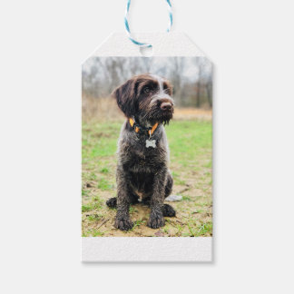 Wirehaired pointing Griffon puppy Gift Tags