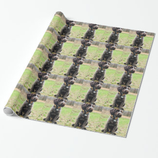 Wirehaired pointing Griffon puppy Wrapping Paper