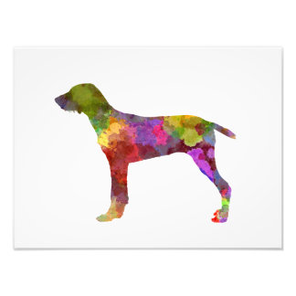 Wirehaired Slovakian Pointer in watercolor-2 Photo Print