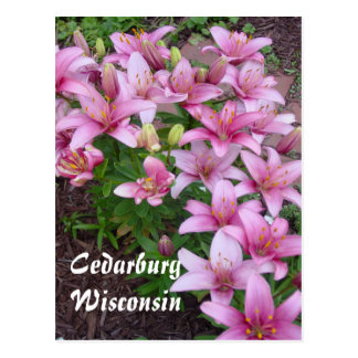 Wisconsin Lillies Postcard