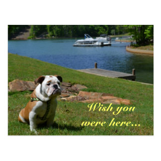 """Wish You Were Here"" English Bulldog at the Lake Postcard"