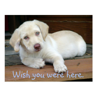 Wish You Were Here Yellow Lab Puppy Postcard