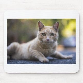 Wishful Beige Tabby Cat Mouse Pad