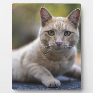 Wishful Beige Tabby Cat Plaque