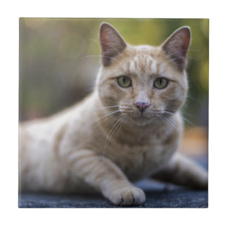 Wishful Beige Tabby Cat Small Square Tile
