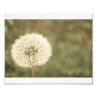 wishing flower aged5 photo print