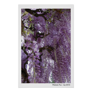 Wisteria Too Poster