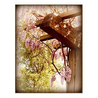 Wisteria Urbane Postcard