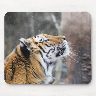 Wistful Winter Tiger Mouse Pad