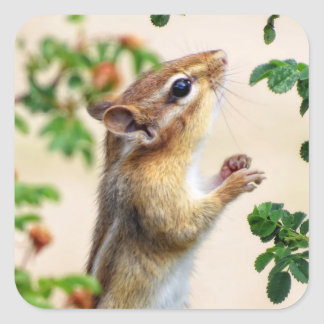 Within Reach - Chipmunk Square Sticker