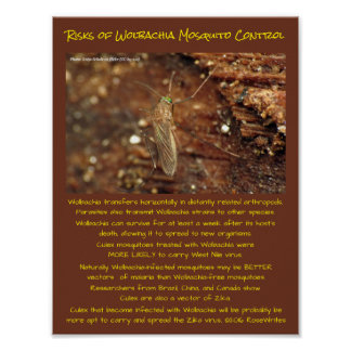 Wolbachia Mosquito Control Risks by RoseWrites Poster