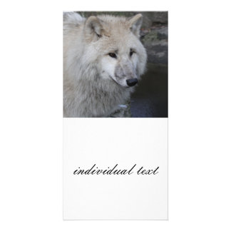wolf 0215 personalized photo card