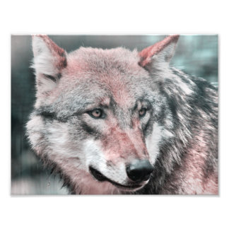 wolf 1115 photographic print