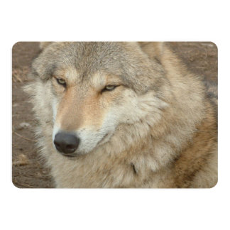 Wolf 13 Cm X 18 Cm Invitation Card
