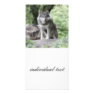 Wolf 14AJ Custom Photo Card