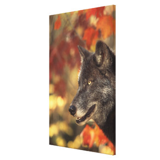 Wolf 3 stretched canvas print