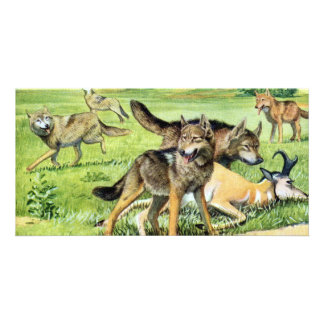 wolf and coyote picture card