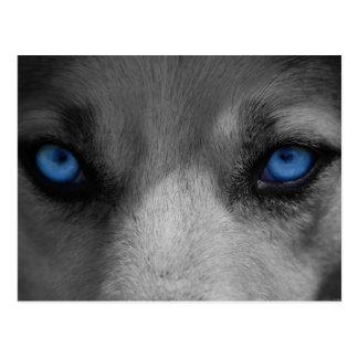 Wolf Blue Eyes Gothic Fantasy Postcard