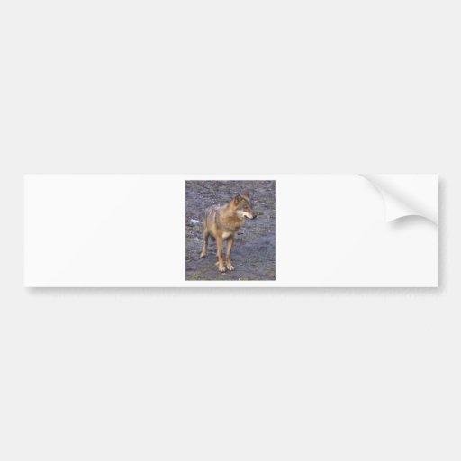 Wolf Bumper Sticker