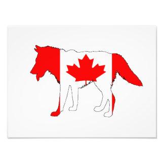 Wolf Canada Photo Print