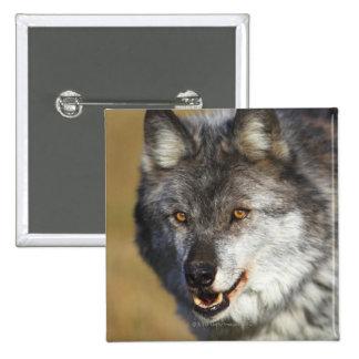 Wolf (Canis Lupus) 15 Cm Square Badge