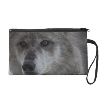 Wolf (Canus lupus) from Yellowstone National Wristlet Clutches