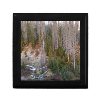 Wolf Creek Pass Forest Landscape Gift Box