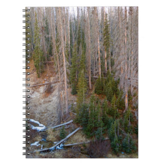 Wolf Creek Pass Forest Landscape Notebooks