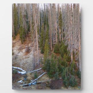 Wolf Creek Pass Forest Landscape Plaque