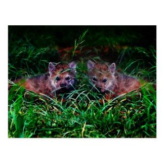 Wolf Cubs Postcard