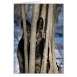 Wolf Dog Thank You Notecards Stationery Note Card