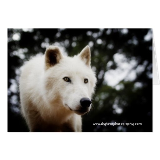 Wolf Greeting Card / Storm 1
