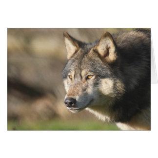 Wolf head shot card