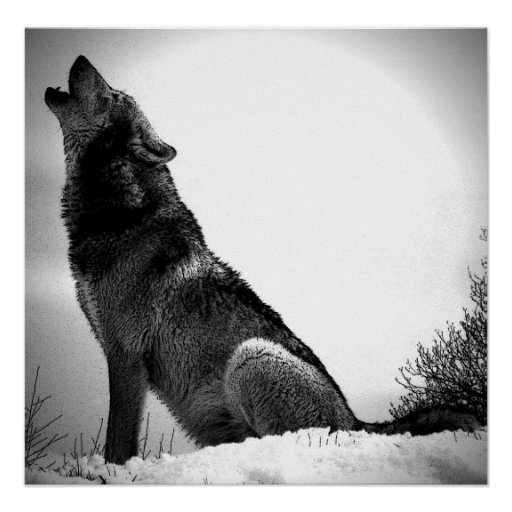 Black wolf howling at moon - photo#10