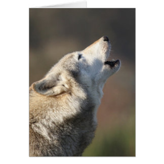 Wolf Howling Card