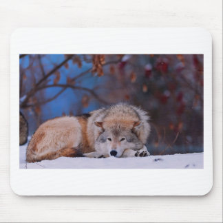 Wolf Hunts In The Snow Mouse Pad