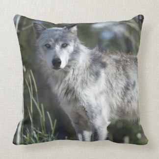 Wolf in Yellowstone Throw Pillow