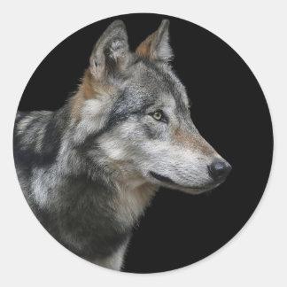 Wolf Portrait Black Background Predator Carnivore Classic Round Sticker