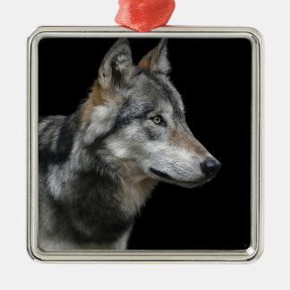 Wolf Portrait Black Background Predator Carnivore Metal Ornament