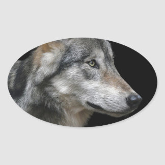 Wolf Portrait Black Background Predator Carnivore Oval Sticker