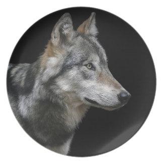 Wolf Portrait Black Background Predator Carnivore Plate